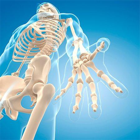 Male skeleton, computer artwork. Stock Photo - Premium Royalty-Free, Code: 679-06672163