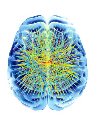Brain and circular network diagram, depicting neural connections in the brain. Stock Photo - Premium Royalty-Free, Code: 679-06672774