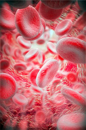 Red blood cells. Computer artwork of red blood cells inside a blood vessel. Stock Photo - Premium Royalty-Free, Code: 679-06672935