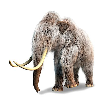 prehistoric - Woolly mammoth (Mammuthus primigenius), computer artwork. Stock Photo - Premium Royalty-Free, Code: 679-06673959