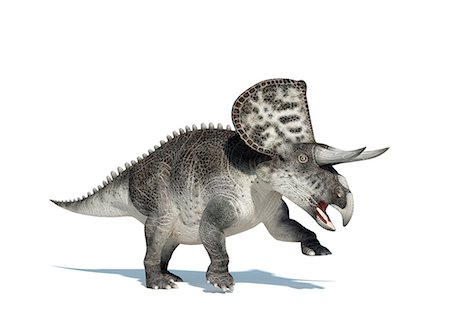 Zuniceratops dinosaur, computer artwork. This dinosaur lived approximately 90 million years ago during the Turonian age of the Late Cretaceous period. Stock Photo - Premium Royalty-Free, Code: 679-06673994
