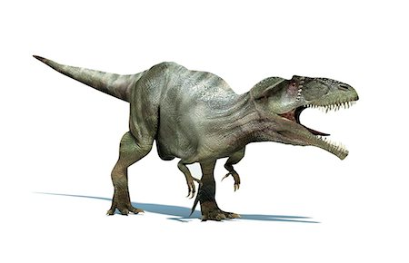 prehistoric - Giganotosaurus dinosaur, artwork. This dinosaur was one of the largest predatory dinosaurs, living around 110-100 million years ago in the Cretaceous Period. Fossil remains have been discovered in Argentina. It could reach over 14 metres in length and weigh over 8 tonnes. Stock Photo - Premium Royalty-Free, Code: 679-06673992