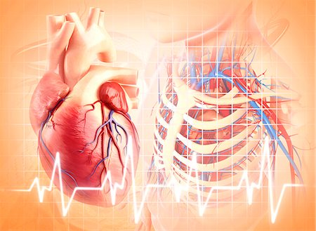 Human heart, computer artwork. Stock Photo - Premium Royalty-Free, Code: 679-06711741