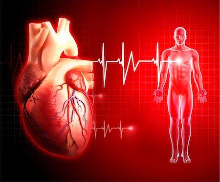 Human heart, computer artwork. Stock Photo - Premium Royalty-Free, Code: 679-06711766
