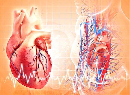 Human heart, computer artwork. Stock Photo - Premium Royalty-Free, Code: 679-06712225
