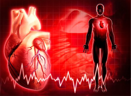 Human heart, computer artwork. Stock Photo - Premium Royalty-Free, Code: 679-06712226