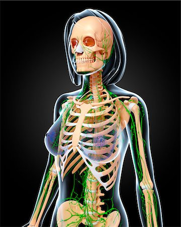 rib - Female anatomy, computer artwork. Stock Photo - Premium Royalty-Free, Code: 679-06712621