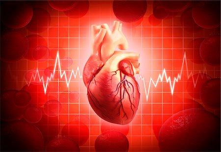 Human heart, computer artwork. Stock Photo - Premium Royalty-Free, Code: 679-06712827