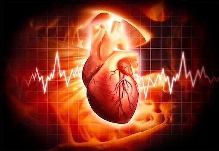 Human heart, computer artwork. Stock Photo - Premium Royalty-Free, Code: 679-06712917