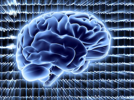 Brain activity. Computer artwork of EEG (electroencephalogram) traces superimposed over a brain illustration. An EEG records the brain's activity. Stock Photo - Premium Royalty-Free, Code: 679-06713867