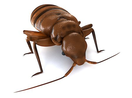 Bedbug (Cimex sp.), computer artwork. Stock Photo - Premium Royalty-Free, Code: 679-06754226