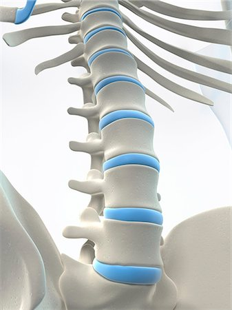 spinal column - Male skeleton, computer artwork. Stock Photo - Premium Royalty-Free, Code: 679-06755380
