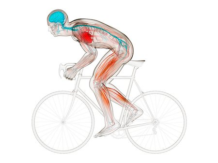 Cyclist, computer artwork. Stock Photo - Premium Royalty-Free, Code: 679-06779685