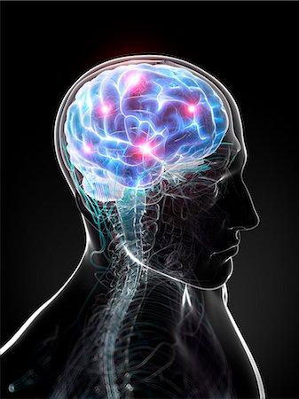 Brain activity, computer artwork. Stock Photo - Premium Royalty-Free, Code: 679-06780211