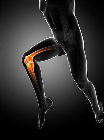 Knee pain, conceptual computer artwork. Stock Photo - Premium Royalty-Free, Code: 679-06780293