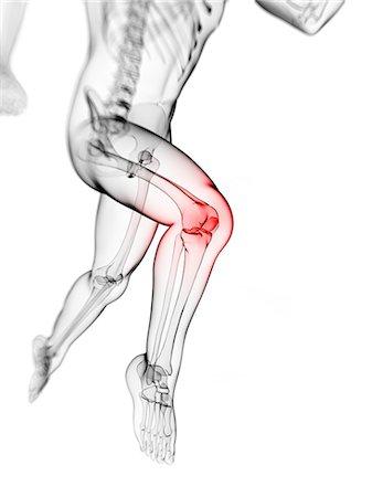 Knee pain, conceptual computer artwork. Stock Photo - Premium Royalty-Free, Code: 679-06780340