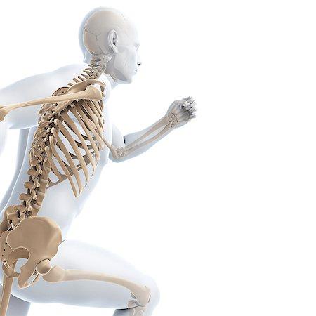 rib - Running skeleton, computer artwork. Stock Photo - Premium Royalty-Free, Code: 679-06780461