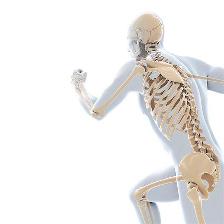 rib - Running skeleton, computer artwork. Stock Photo - Premium Royalty-Free, Code: 679-06780462