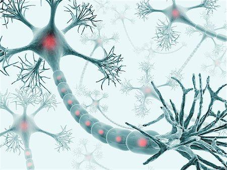 synapse - Neural network, computer artwork. Stock Photo - Premium Royalty-Free, Code: 679-06780969
