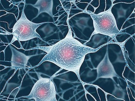 synapse - Neural network, computer artwork. Stock Photo - Premium Royalty-Free, Code: 679-06780977