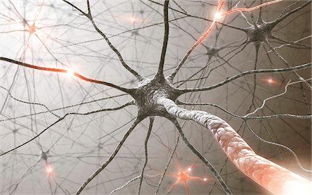 synapse - Neural network, computer artwork. Stock Photo - Premium Royalty-Free, Code: 679-06780979