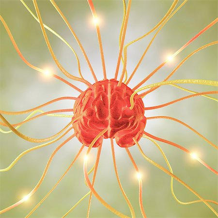 synapse - Central nervous system, conceptual computer artwork. Stock Photo - Premium Royalty-Free, Code: 679-06780988