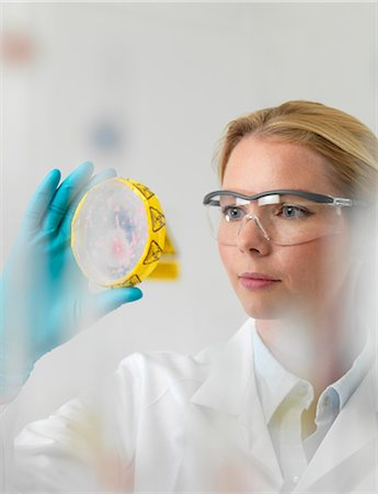 Microbiology research. Scientist examining cultures in a petri dish. Stock Photo - Premium Royalty-Free, Code: 679-06781240