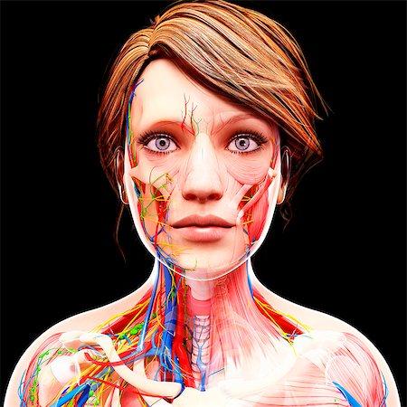 Female anatomy, computer artwork. Stock Photo - Premium Royalty-Free, Code: 679-07151619
