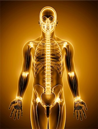 spinal column - Human skeleton, computer artwork. Stock Photo - Premium Royalty-Free, Code: 679-07152114