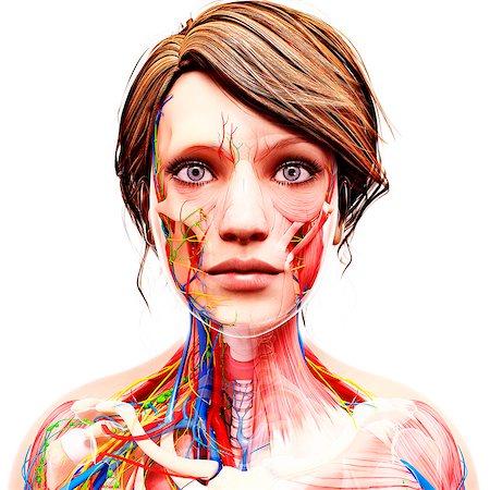 Female anatomy, computer artwork. Stock Photo - Premium Royalty-Free, Code: 679-07163061