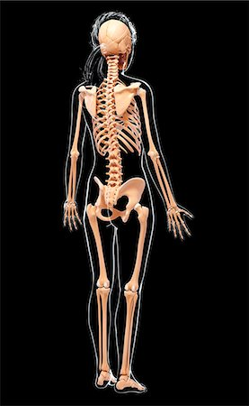 spinal column - Human skeleton, computer artwork. Stock Photo - Premium Royalty-Free, Code: 679-07163074