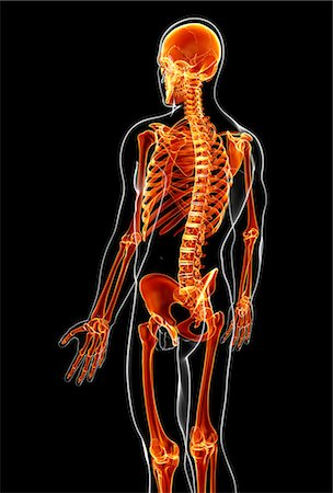 spinal column - Male skeleton, computer artwork. Stock Photo - Premium Royalty-Free, Code: 679-07163547
