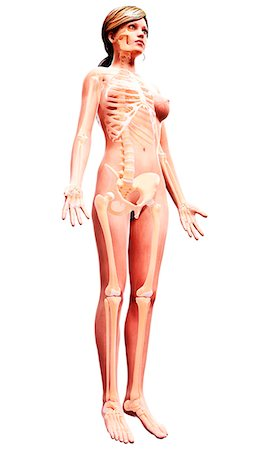 Female skeleton, computer artwork. Stock Photo - Premium Royalty-Free, Code: 679-07163997