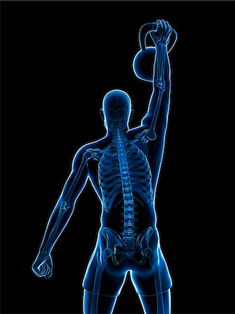 human skeleton weight lifting stock photos - page 1 : masterfile,