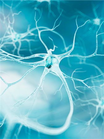 synapse - Nerve cell, computer artwork. Stock Photo - Premium Royalty-Free, Code: 679-07604259