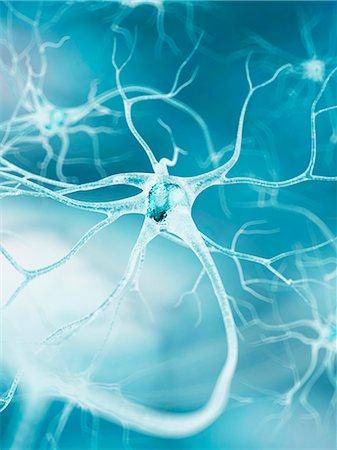 Nerve cell, computer artwork. Stock Photo - Premium Royalty-Free, Code: 679-07604259