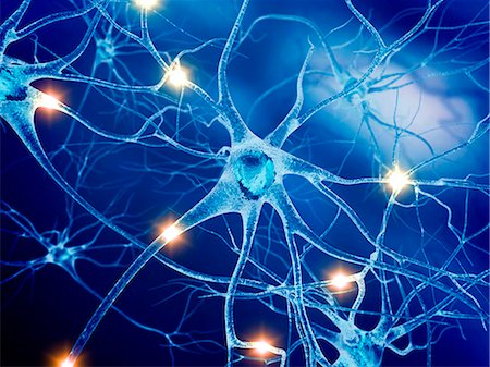 Active nerve cells, computer artwork. Stock Photo - Premium Royalty-Free, Code: 679-07604253