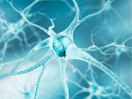 Nerve cell, computer artwork. Stock Photo - Premium Royalty-Free, Code: 679-07604261