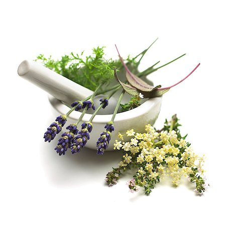 Medicinal plants, conceptual image. Stock Photo - Premium Royalty-Free, Code: 679-07604351