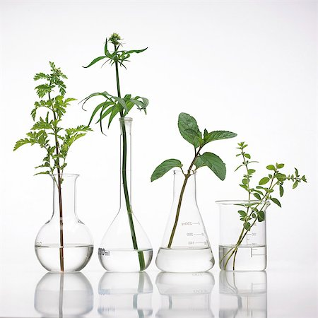 pharmaceutical plant - Medicinal plants, conceptual image. Stock Photo - Premium Royalty-Free, Code: 679-07604372