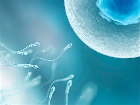 sperme - Egg and sperm, computer artwork. Stock Photo - Premium Royalty-Free, Code: 679-07604428