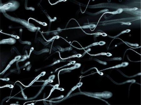 sperme - Human sperm, computer artwork. Stock Photo - Premium Royalty-Free, Code: 679-07604435