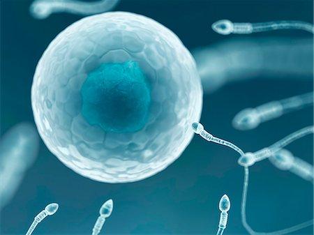 sperme - Egg and sperm, computer artwork. Stock Photo - Premium Royalty-Free, Code: 679-07604441