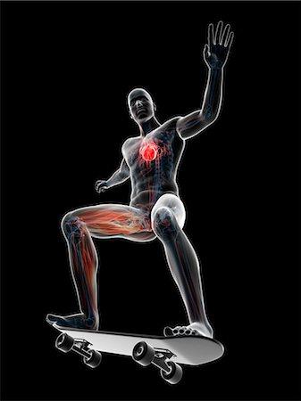 Male anatomy, computer artwork. Stock Photo - Premium Royalty-Free, Code: 679-07607461