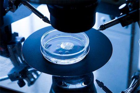 sperme - IVF treatment. Embryo culture dish used for in vitro fertilisation (IVF). Stock Photo - Premium Royalty-Free, Code: 679-07607844