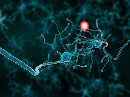Artwork of two nerve cells transmitting a signal. Stock Photo - Premium Royalty-Free, Code: 679-07608039