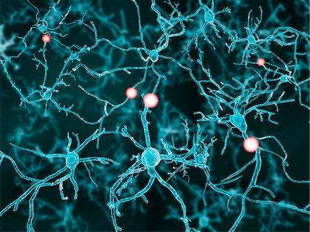 Artwork of nerve cells. Stock Photo - Premium Royalty-Free, Code: 679-07608068