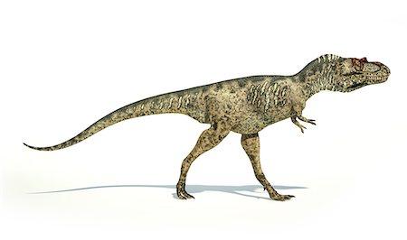 prehistoric - Artwork of an albertosaurus dinosaur against a white background. Stock Photo - Premium Royalty-Free, Code: 679-07608100