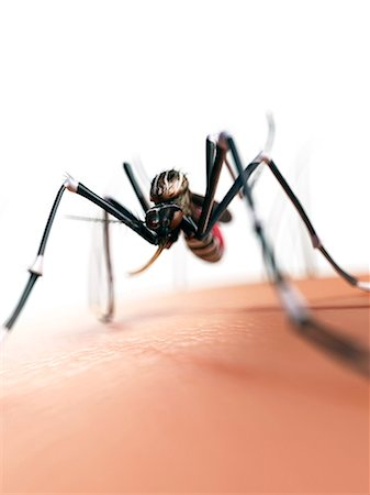 Mosquito on skin, computer artwork. Stock Photo - Premium Royalty-Free, Code: 679-07603228