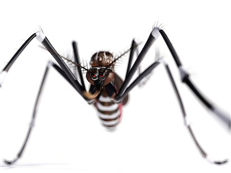 Mosquito, computer artwork. Stock Photo - Premium Royalty-Free, Code: 679-07603236